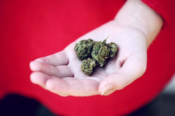 beginner guide to cannabis vatic cannabis co how to use safely